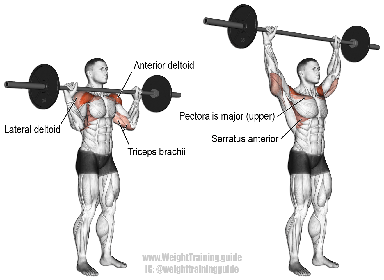 Barbell Overhead Press A Major Compound Exercise That Ll