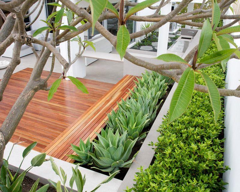 Modern Aloe Vera Garden Patio Deck Ideas Gardening Pinterest