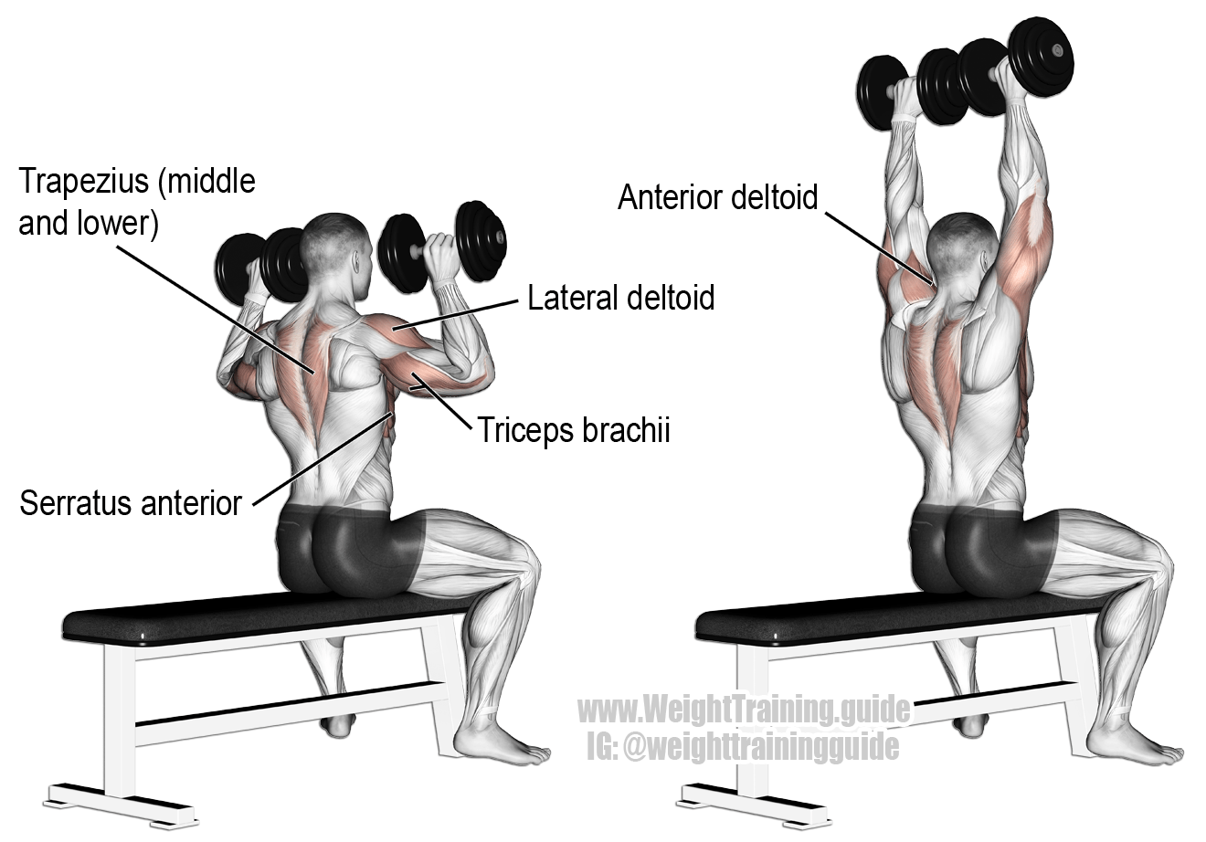 Seated Dumbbell Overhead Press A Compound Exercise