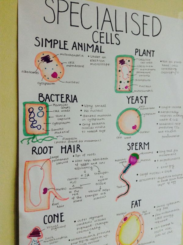 Cell Biology Notes