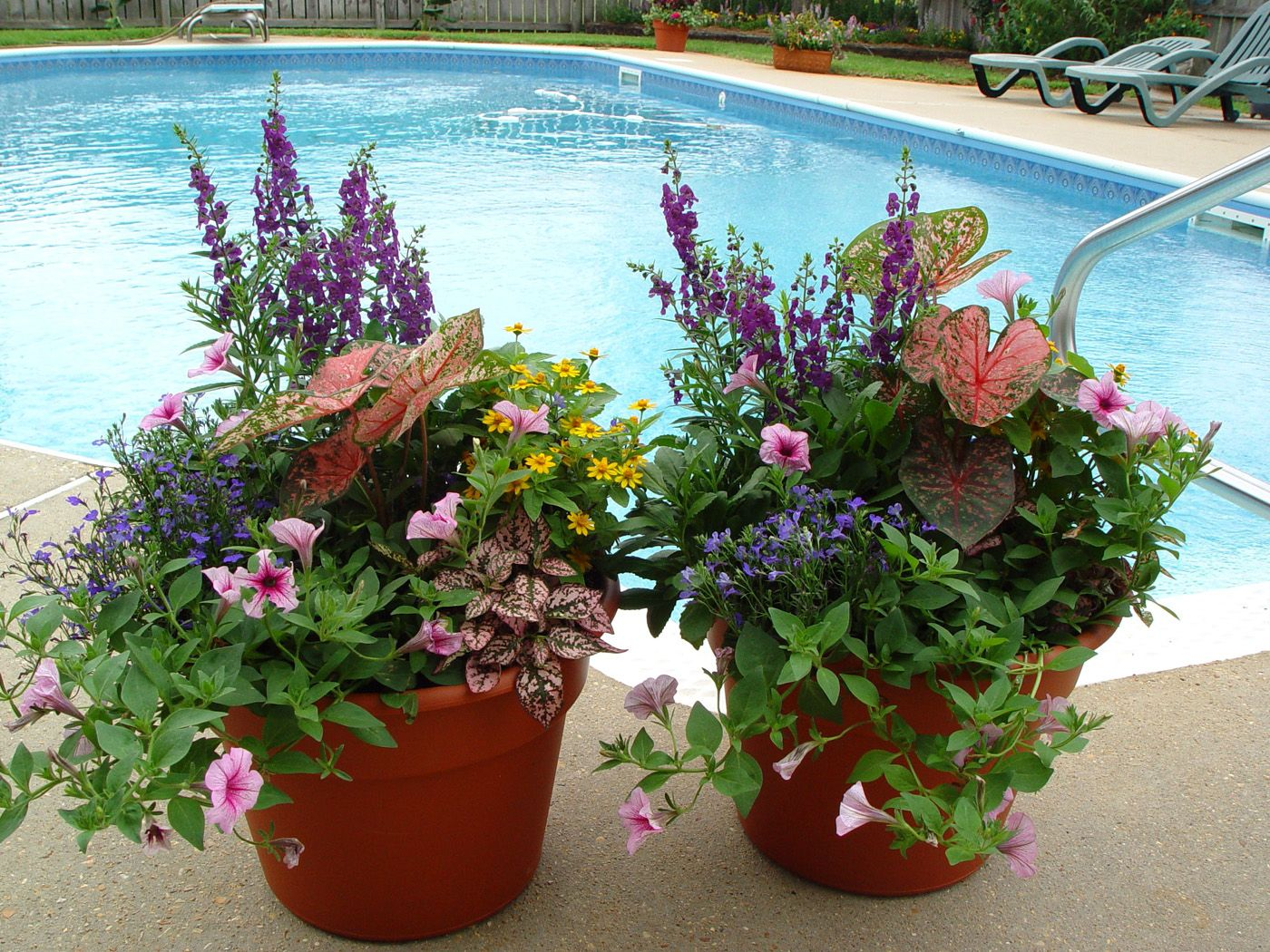 Container Gardening Pictures Mississippi Gardens Newsletter