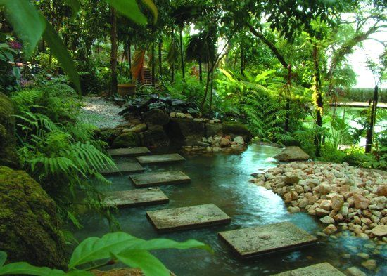 Jungle Garden Design Ideas