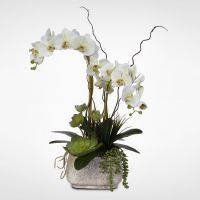 Real Touch Phalaenopsis Silk Orchid Arrangement with ...