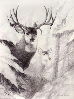 deer wildlife drawings drawing sketches sketch pencil simple animal graphite deviantart mulie misted dream cool coloring buffalo creative sketching paintings