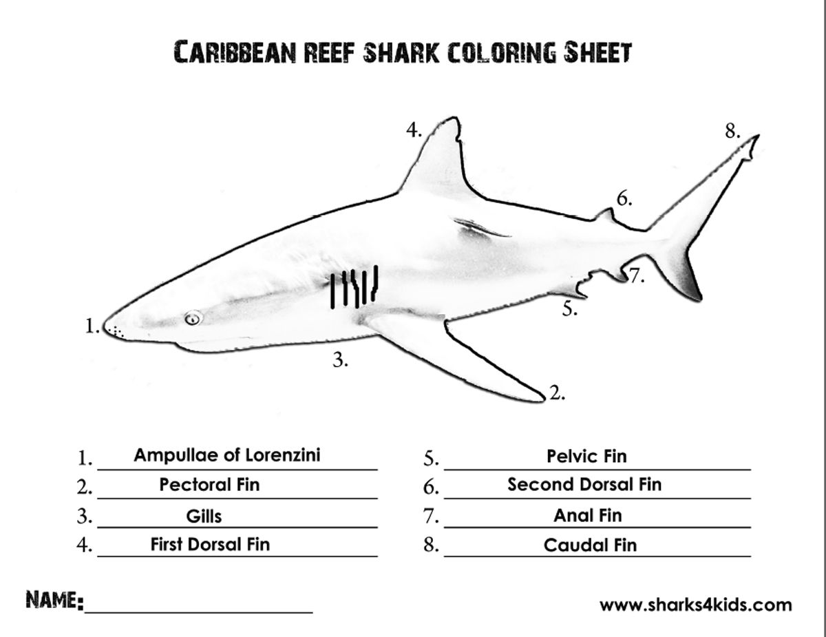 A Coloring Sheet That Will Help Kids Learn The Parts Of A