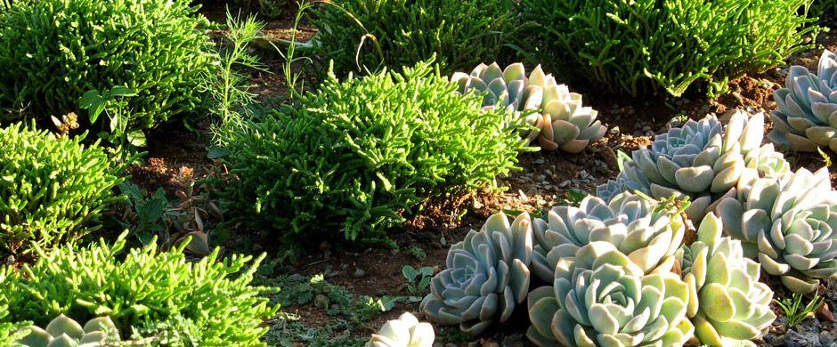 Gardening South Africa Ideas Google Search Garden Pinterest