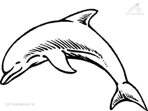 Delphin malvorlage - Ausmalbilder für kinder Delfin