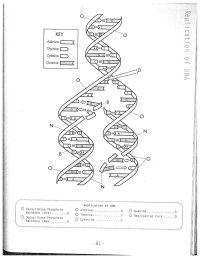DNA Replication Coloring Worksheet on Dna Coloring ...