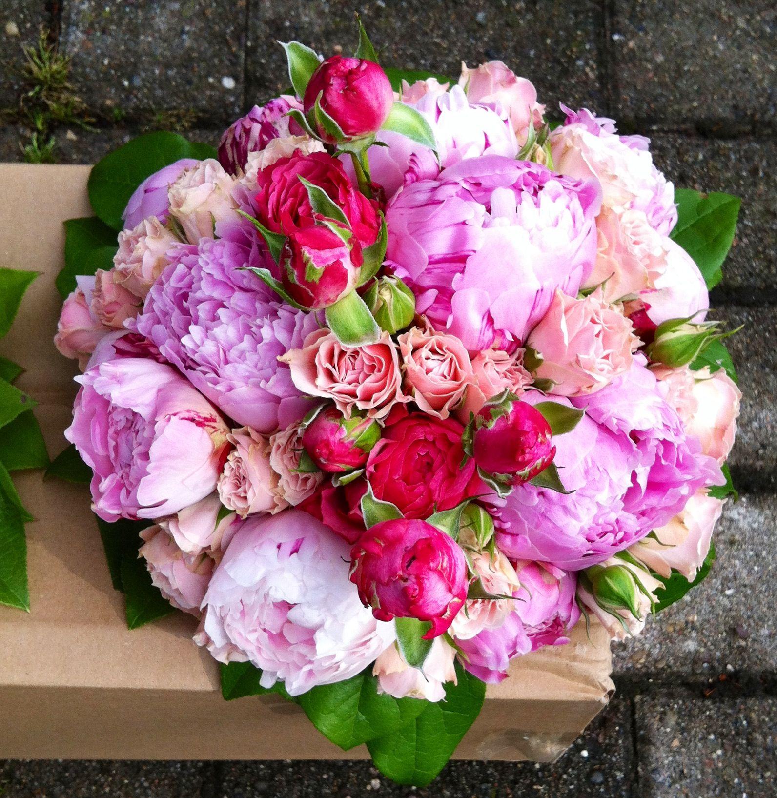 Regenbogen Rosen Bestellen 3 regenbogen rosen und
