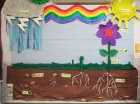 Plant growth classroom display photo
