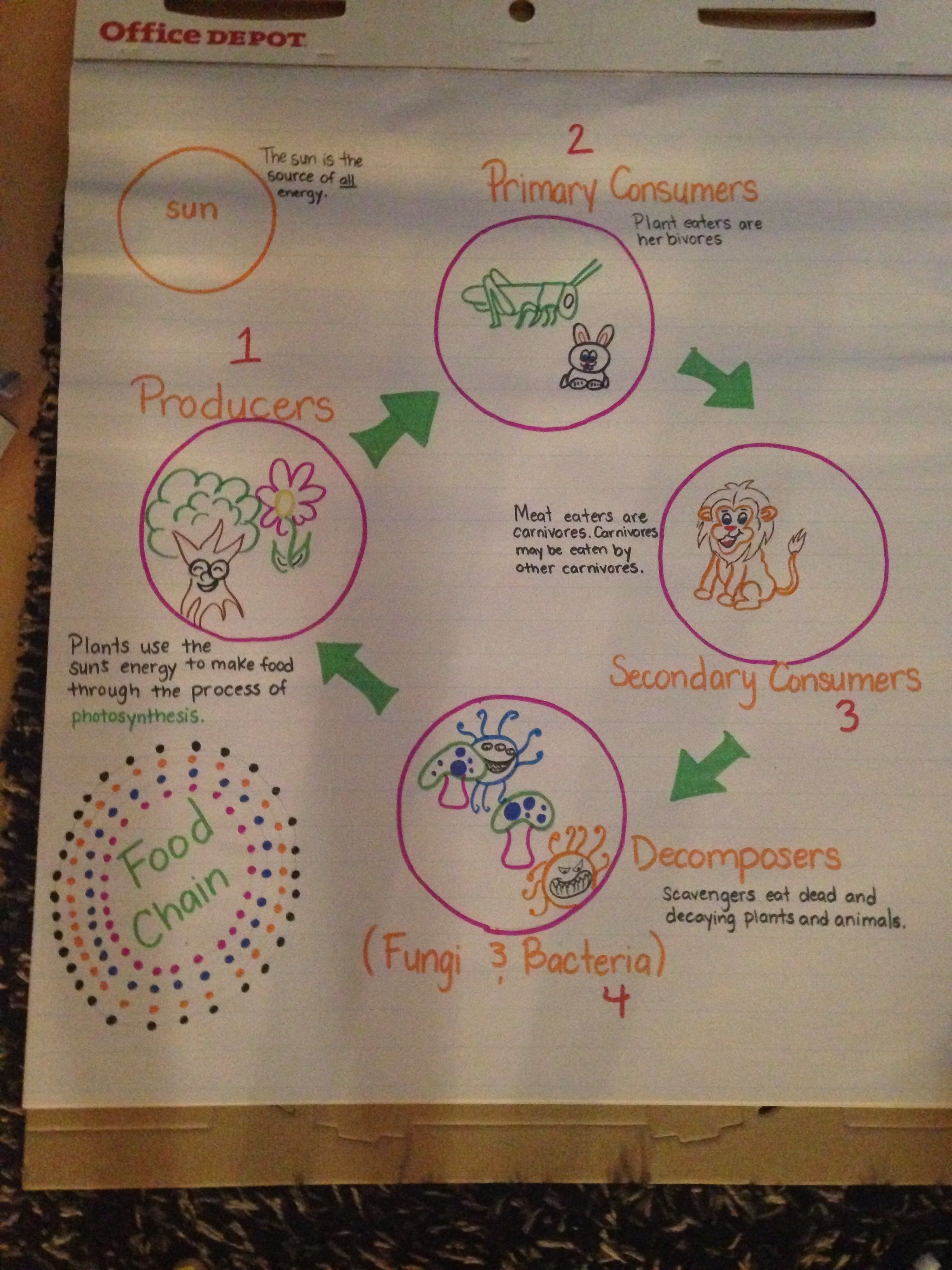 Food Chain 4th Grade