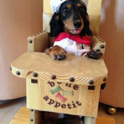Chairs For Dogs Hand Chair Sale Bailey With Canine Megaesophagus Www