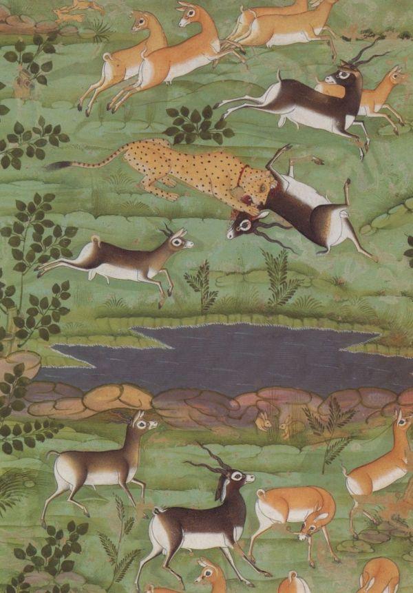 Shah Jahan Hunting Deer With Trained Cheetahs Detail Rajasthan India Ca. 1710 Animals