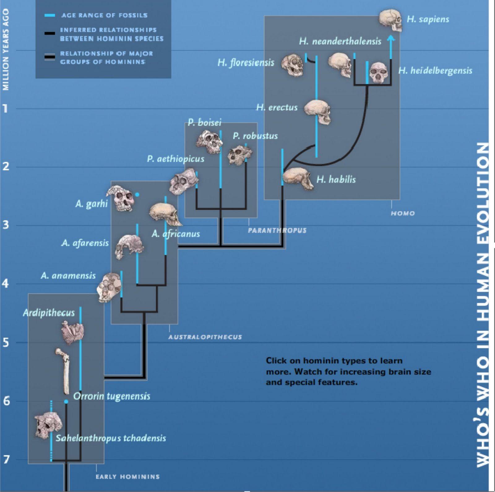 Evolucion De Los Homininos