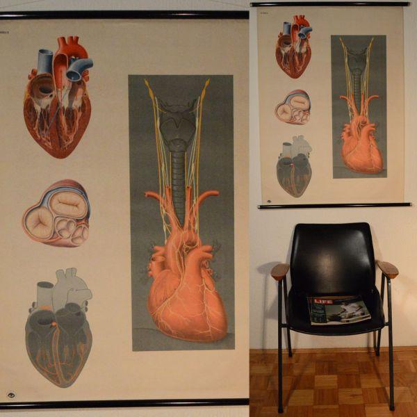 Vintage Anatomical Poster Herz Le Coeur Heart