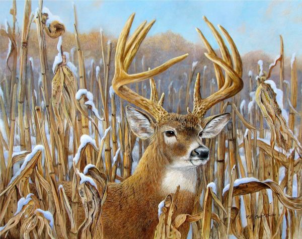 Wildlife Artists Prints Home Artist Paintings Field Journal Publications&awards