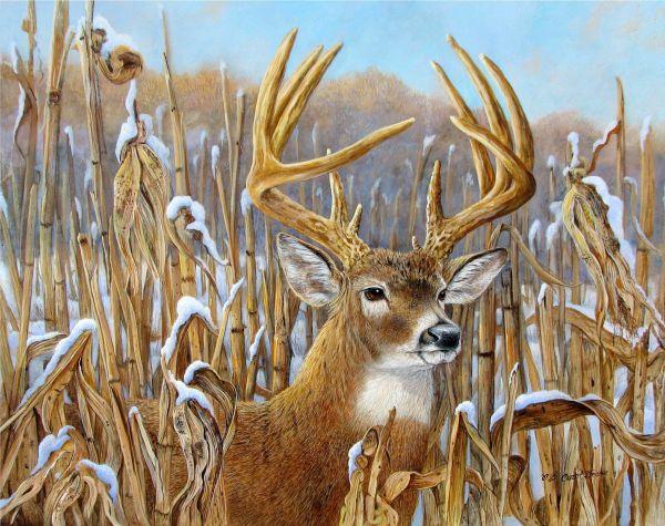 Whitetail Deer Buck Paintings