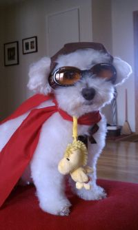 Snoopy Maltipoo. I wish I could talk Brady into this ...
