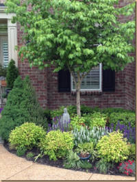 Small front yard foundation planting - evergreen shrubs ...