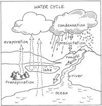 The Hydrologic Cycle | Worksheets, Cycling and Google search
