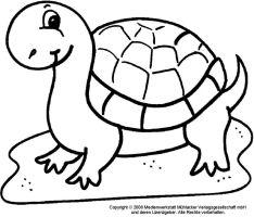 ausmalbilder schildkröte   ausmalbilder   Pinterest ...