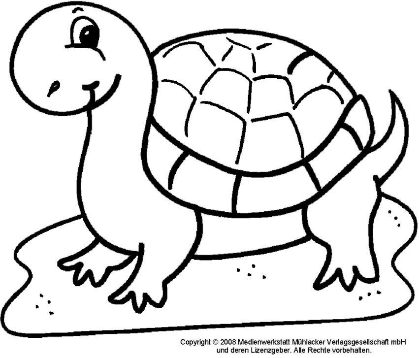 Ausmalbilder schildkröte ausmalbilder Pinterest