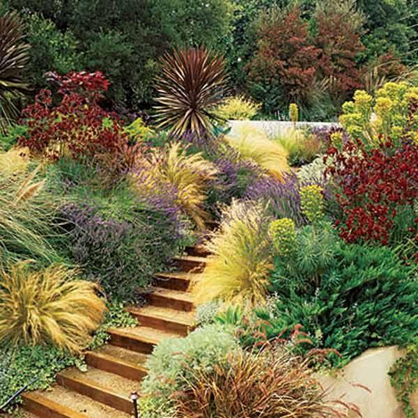 drought tolerant colorful