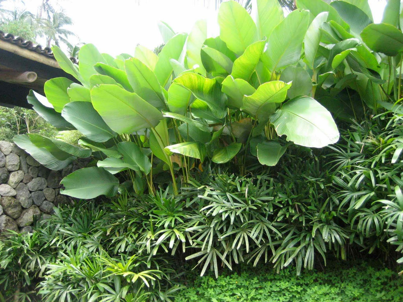 362 Best Images About Garden Ideas For My House In Oyarifa Ghana