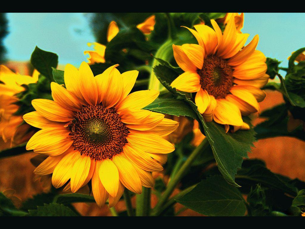Wallpaper Foto dan Gambar Bunga Cantik untuk Laptop