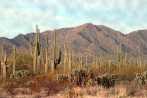 Desert Mexico Baja California