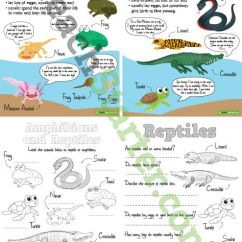 Venn Diagram Of Reptiles And Amphibians Square D 3 Phase Motor Starter Wiring Worksheets Posters Pack | Teaching Resources - Teach ...