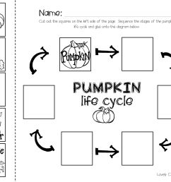 Paint Life Cycle Worksheet   Printable Worksheets and Activities for  Teachers [ 2550 x 3300 Pixel ]