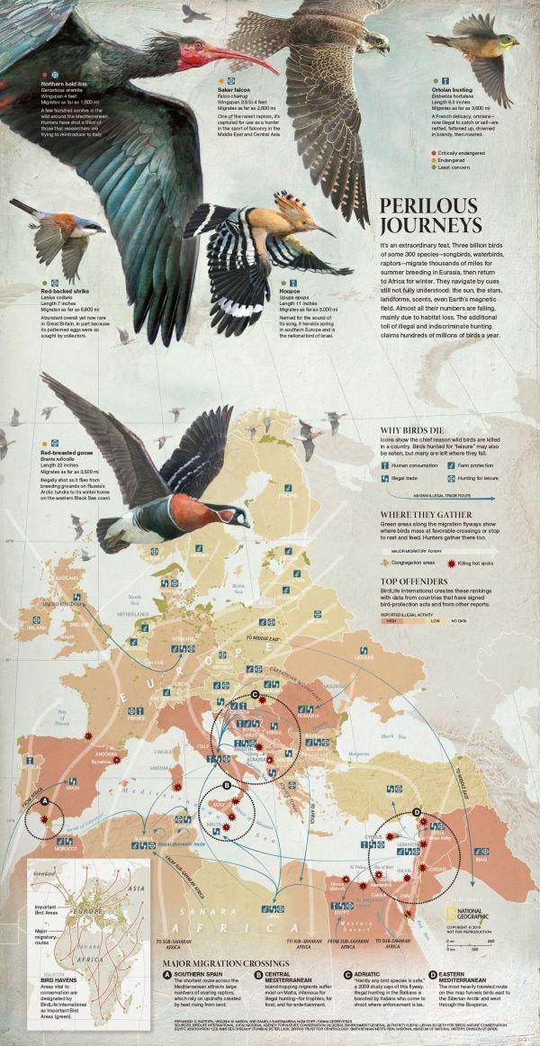 National Geographic Bird Migration