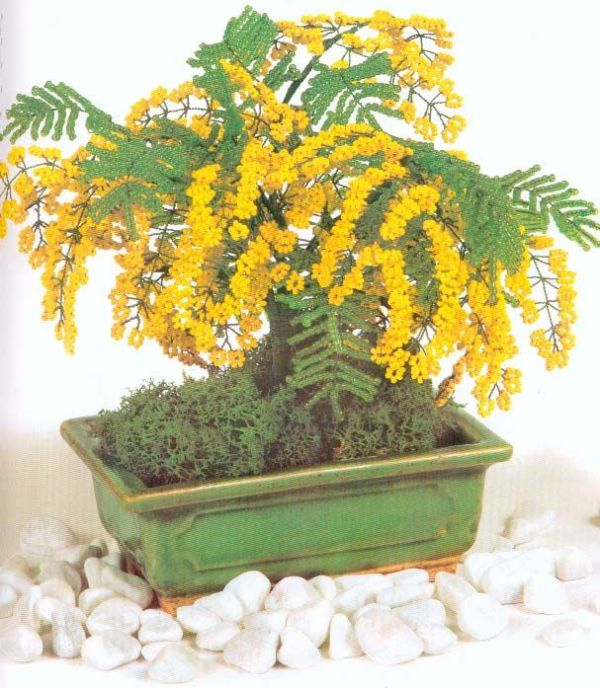 My dream home has a bonsai mimosa tree Kept alive by a
