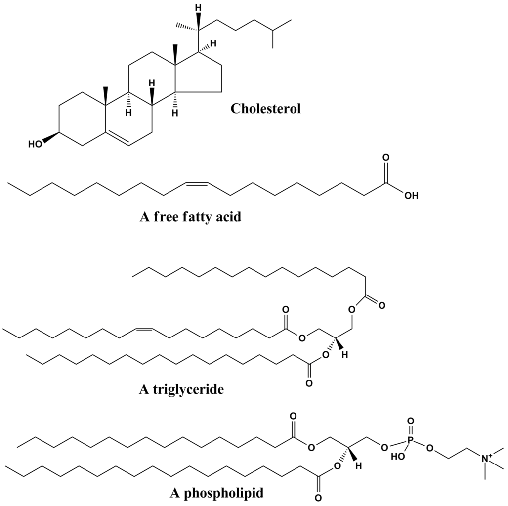 Structure of Lipids http://biology.clc.uc.edu/courses