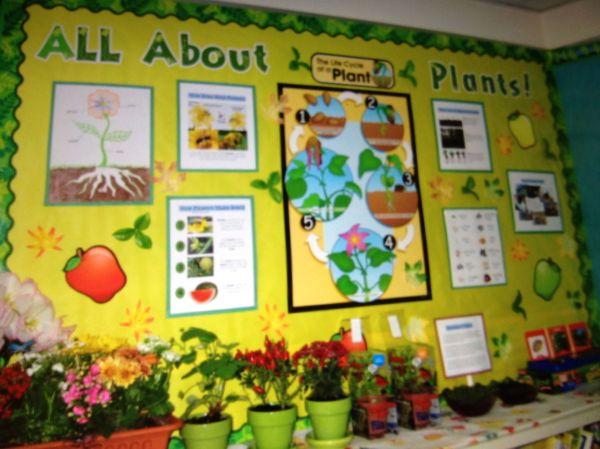 Plants - 2nd Grade Science Bulletin Board