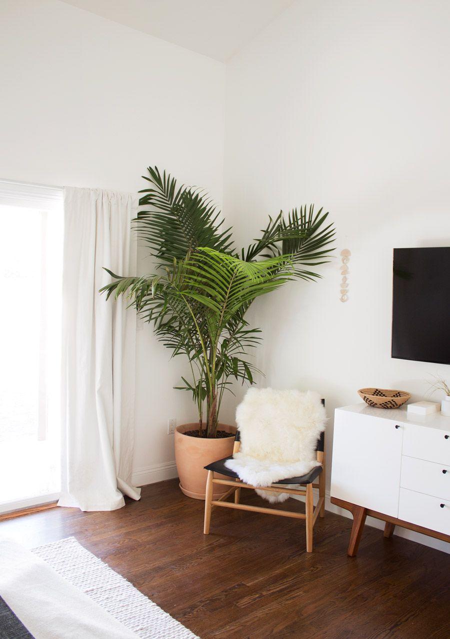 Indoor Plants Home Decor Ideas Planters Hanging Plants Clean