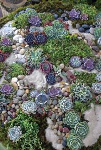 Succulent rock garden  | Garden | Pinterest | Cake table ...