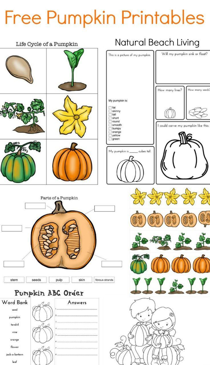 Best Pumpk Ctivities Kids Stem Pumpk L E Cycle