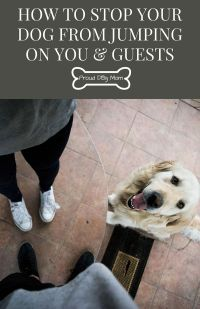 How To Stop Your Dog From Jumping On You & Guests | Pets ...