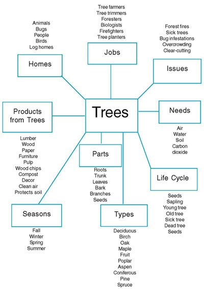Figure 1 Planning Web Of The Tree Project Created By The