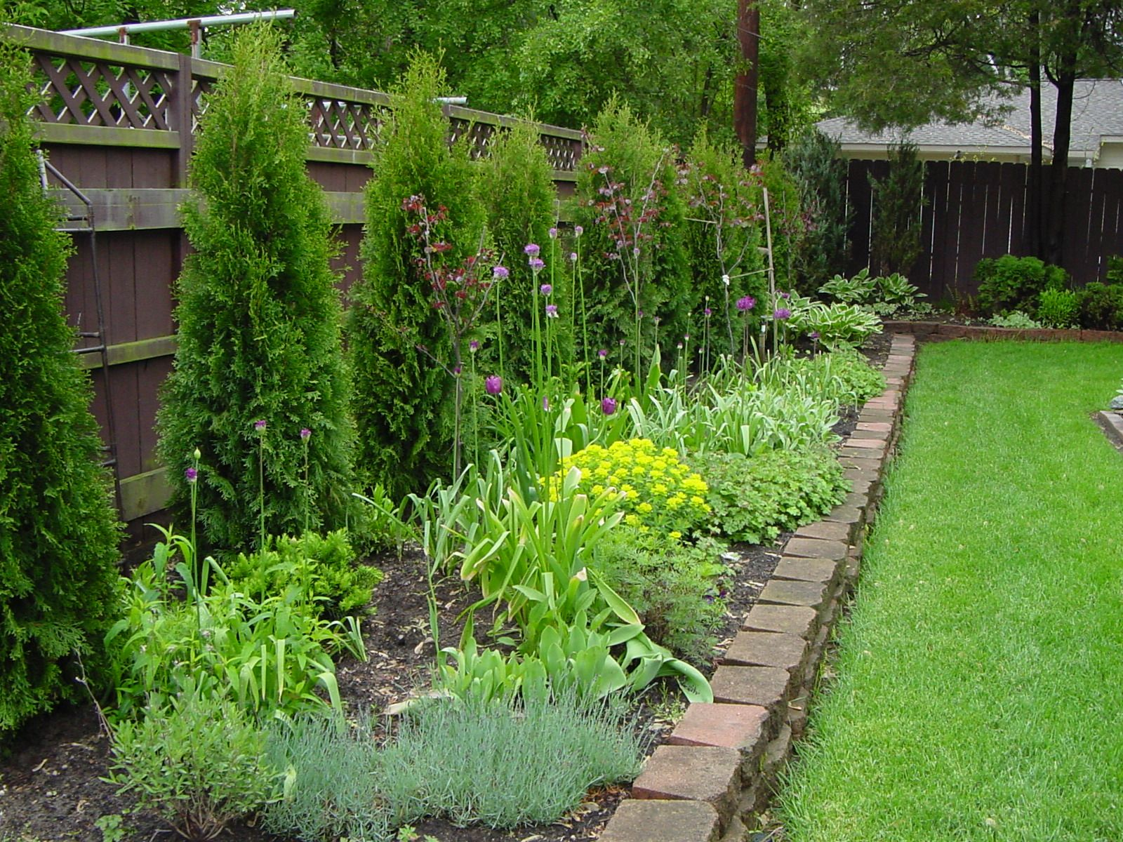 Knockout Roses And Hostas Planted Along Fence Low Maintenance And