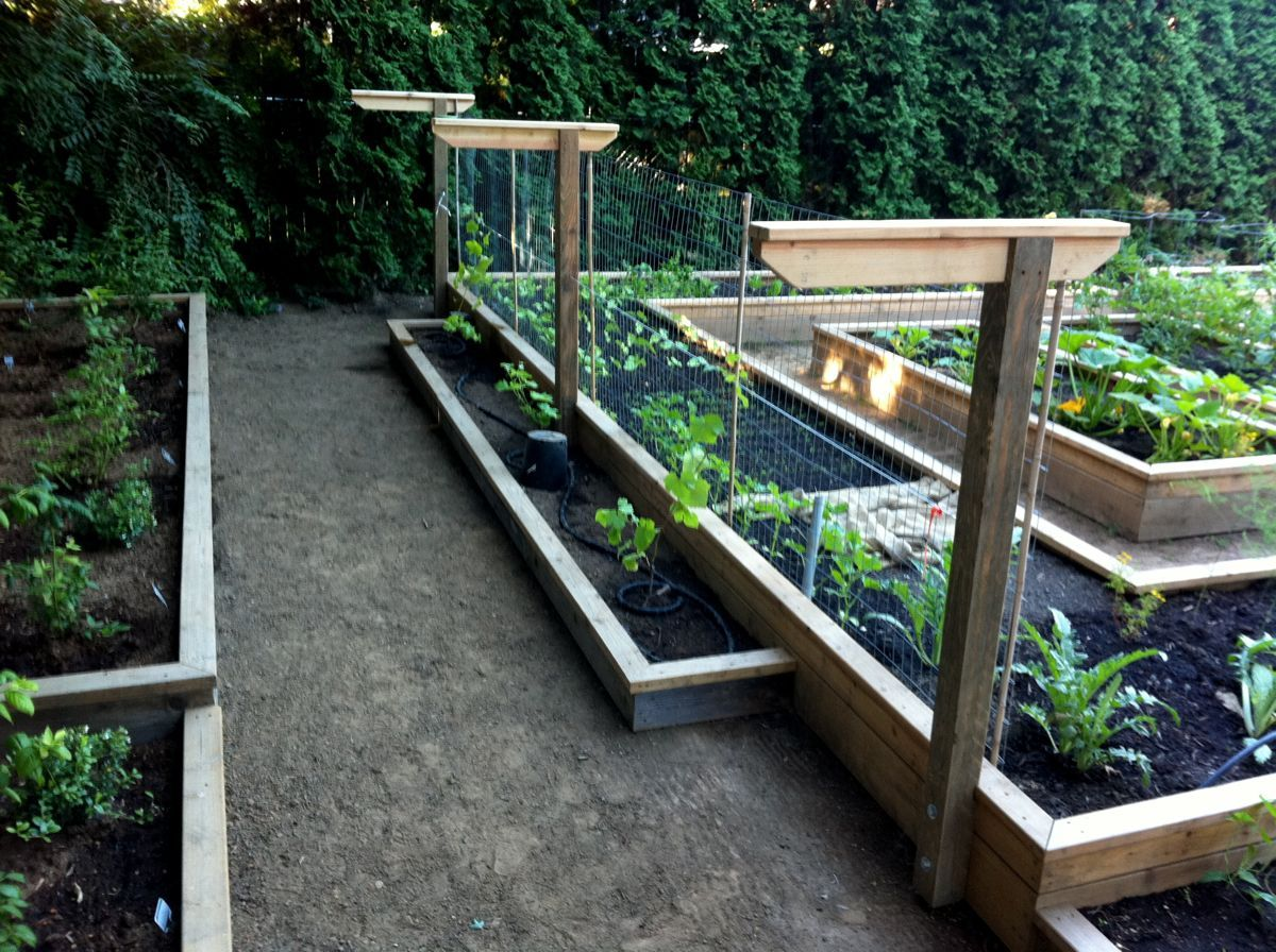 Raised Beds On Different Levels And Building A Grape Trellis From