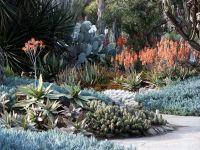 Aloe & blue stick succulents, Huntington Library Desert ...