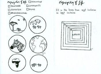 Organization of Life Coloring sheet population community