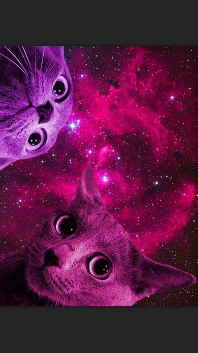 Ripndip Iphone Wallpaper Space Cats Just Simply Amazing Pinterest Space