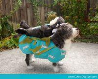 Dog In Fish Costume   www.imgkid.com - The Image Kid Has It!