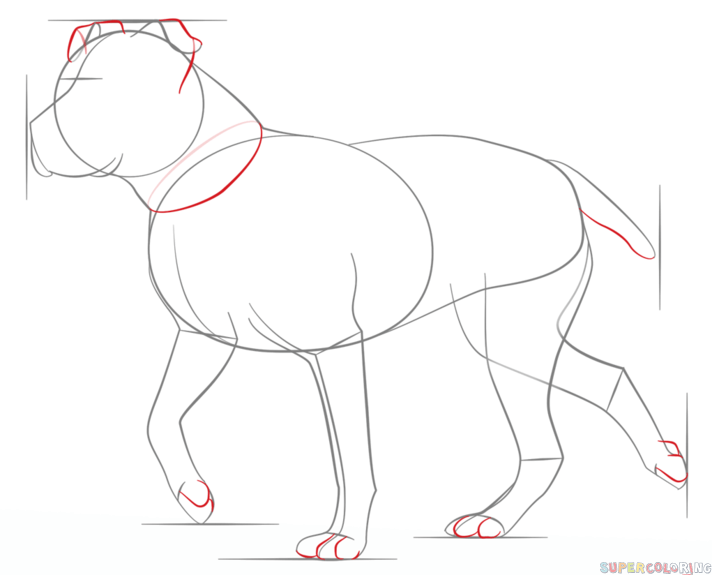 How to draw a pitbull step by step. Drawing tutorials for