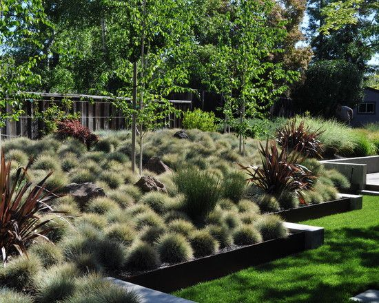 fabulous nz native garden design ideas with garden ideas nz - Native Garden Ideas Nz