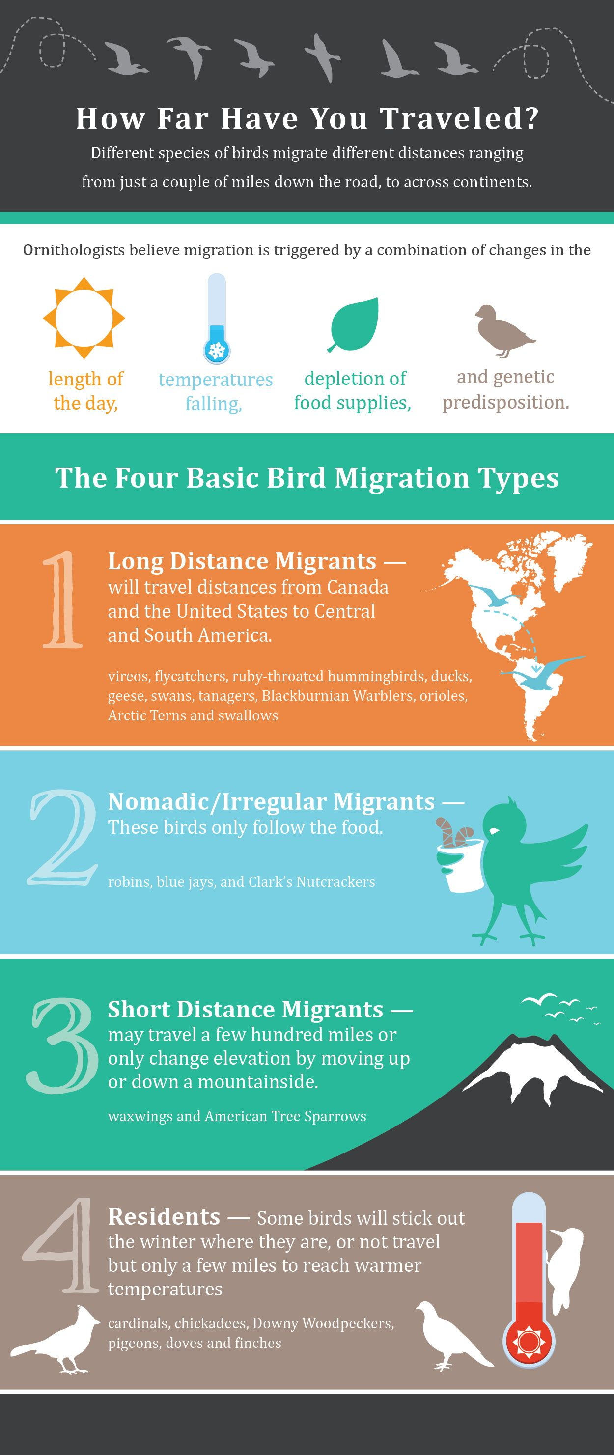 Bird Migration Infographic